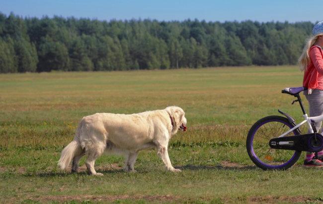 レトリーバー,自転車