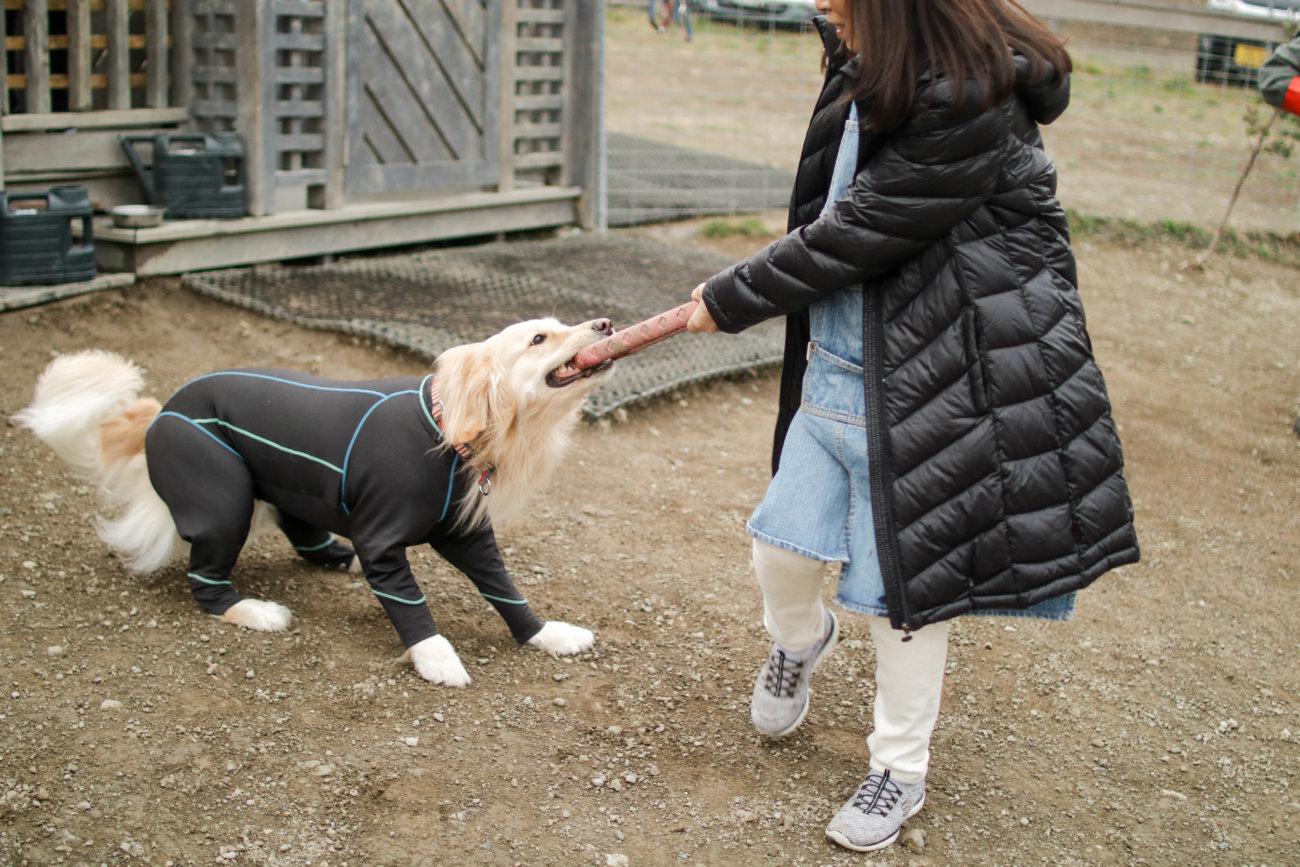 レトリーバー,看板犬,ドッグラン