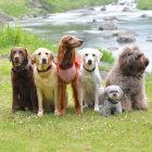 【レト飼いさんへ】小型犬の飼い主として知っておいてほしいことーby Rocoー