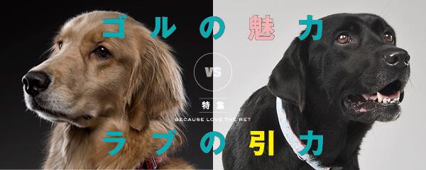 【特集】ゴルの魅力 vs ラブの引力
