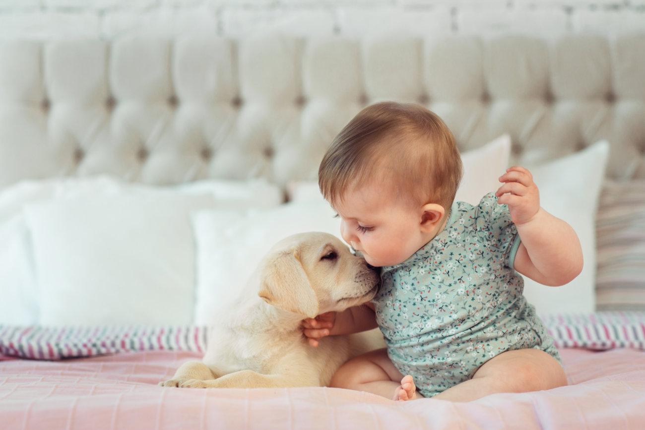 レトリーバー,赤ちゃん