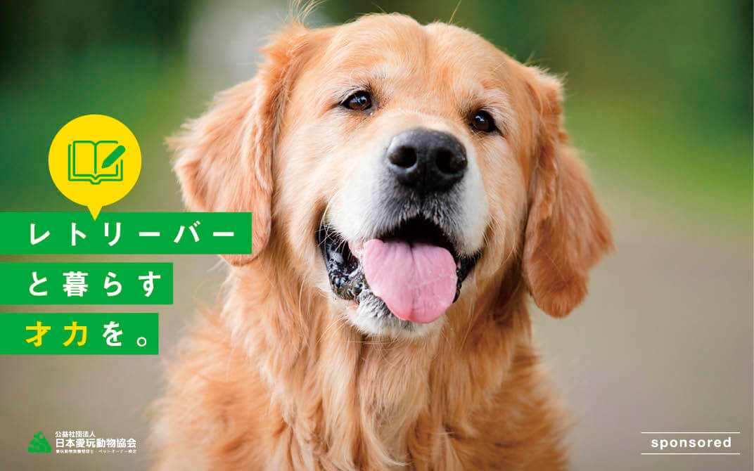 レトリーバー,愛玩動物管理