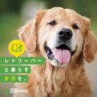 日本はナゼ犬に優しくない?犬との暮らしをもう一度考える「愛玩動物飼養管理士」受験のススメ