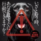 【無料DL】ひと手間が愛レトを救う『愛犬健康管理シート』!体験者は語る「いつもは冷静な私が、愛レトの発作でパニックに…」