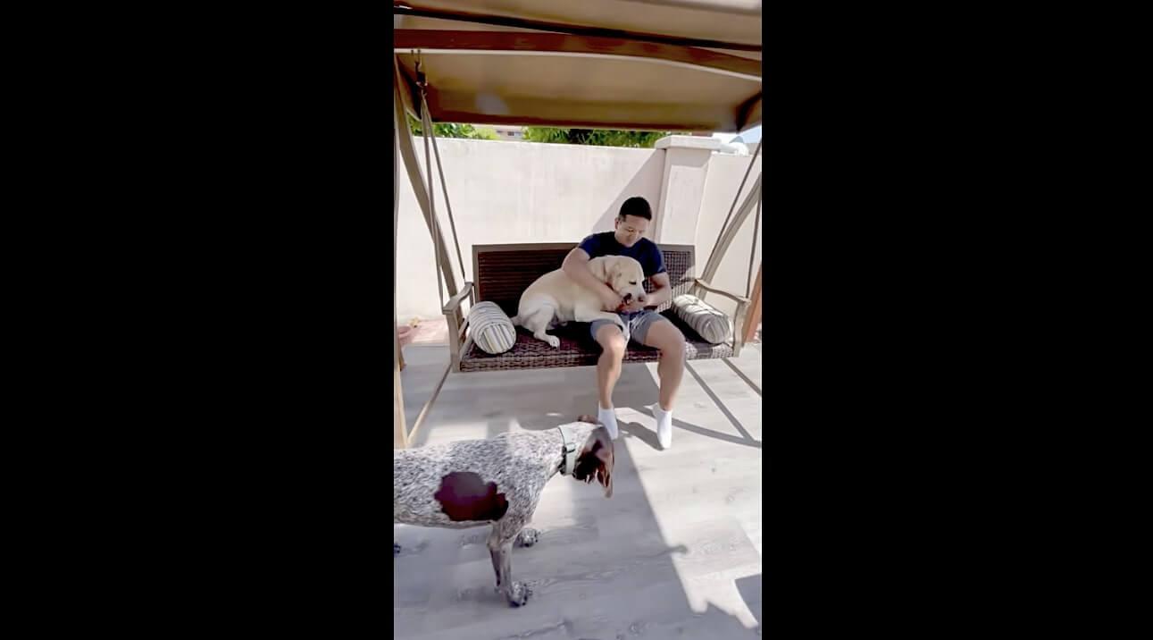 ラブラドールレトリーバー,動画