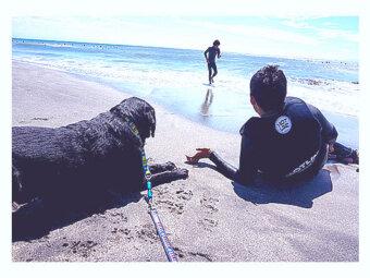 ラブラドール,介助犬,パラサーファー