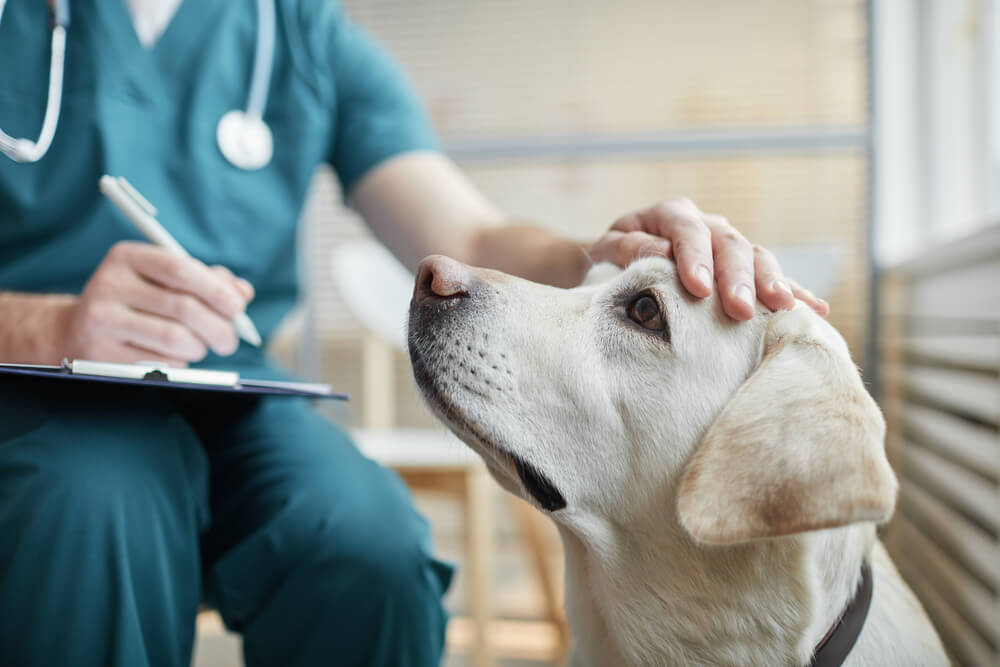 レトリーバー,かかりつけ医,動物病院